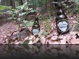 Pilse im Wald