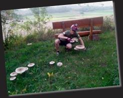 fette Pilze